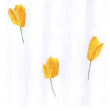 TULIP YELLOW - Shower Curtains